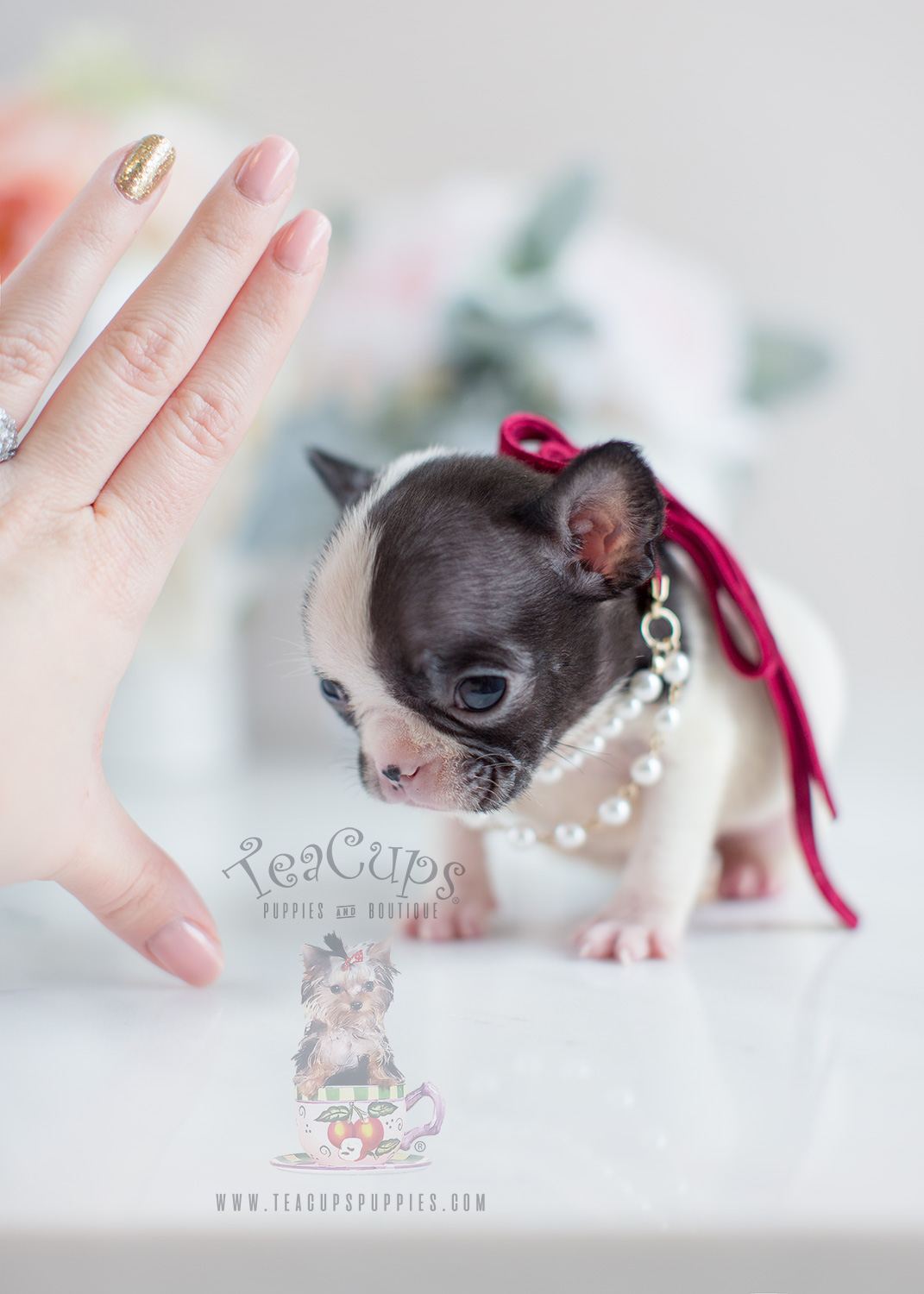 how to prepare for a french bulldog puppy