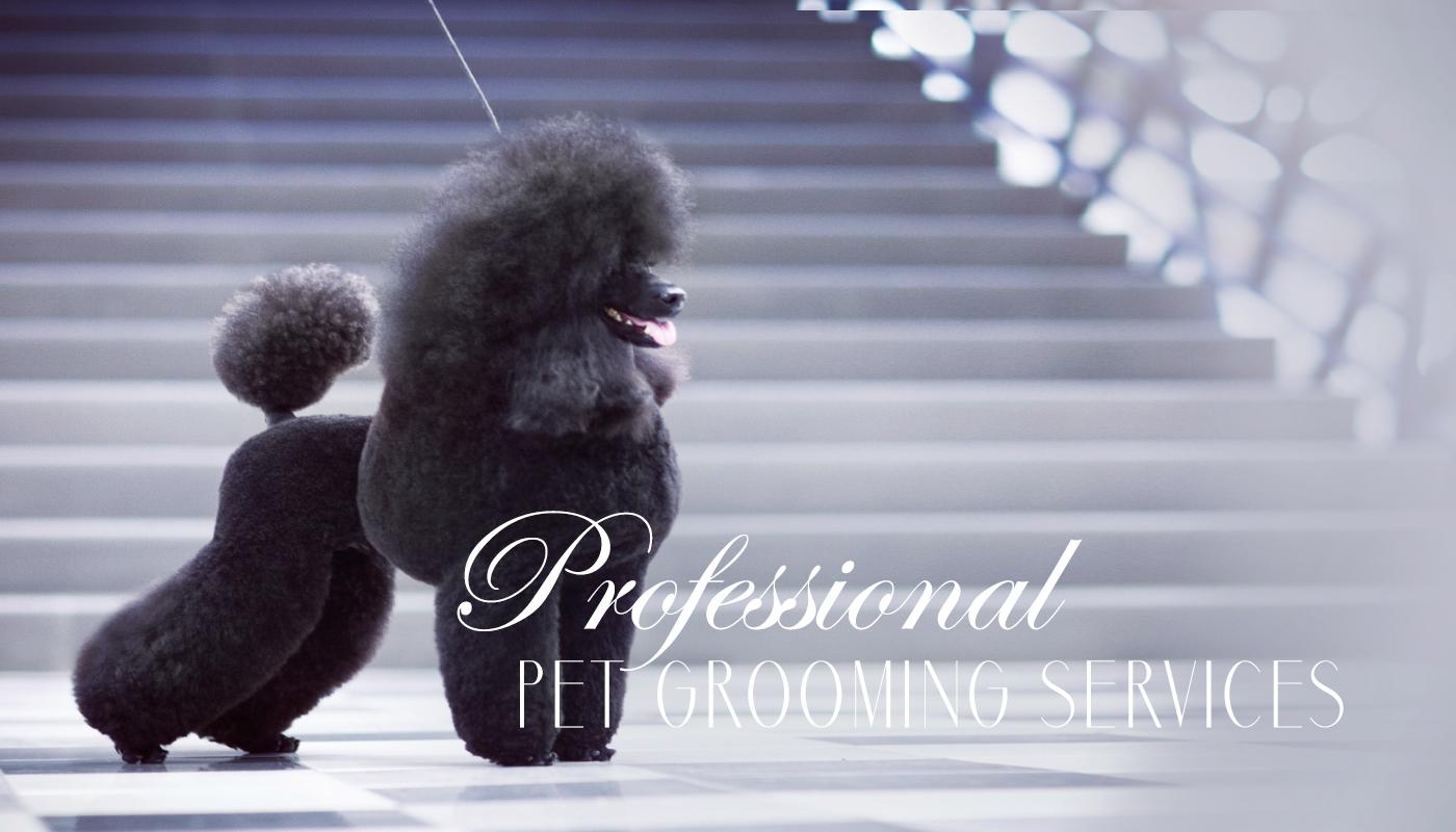 Davie Dog Grooming Salon Teacups Puppies Boutique
