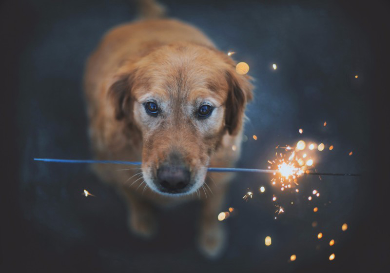Keeping Your Pets Safe on the Fourth of July