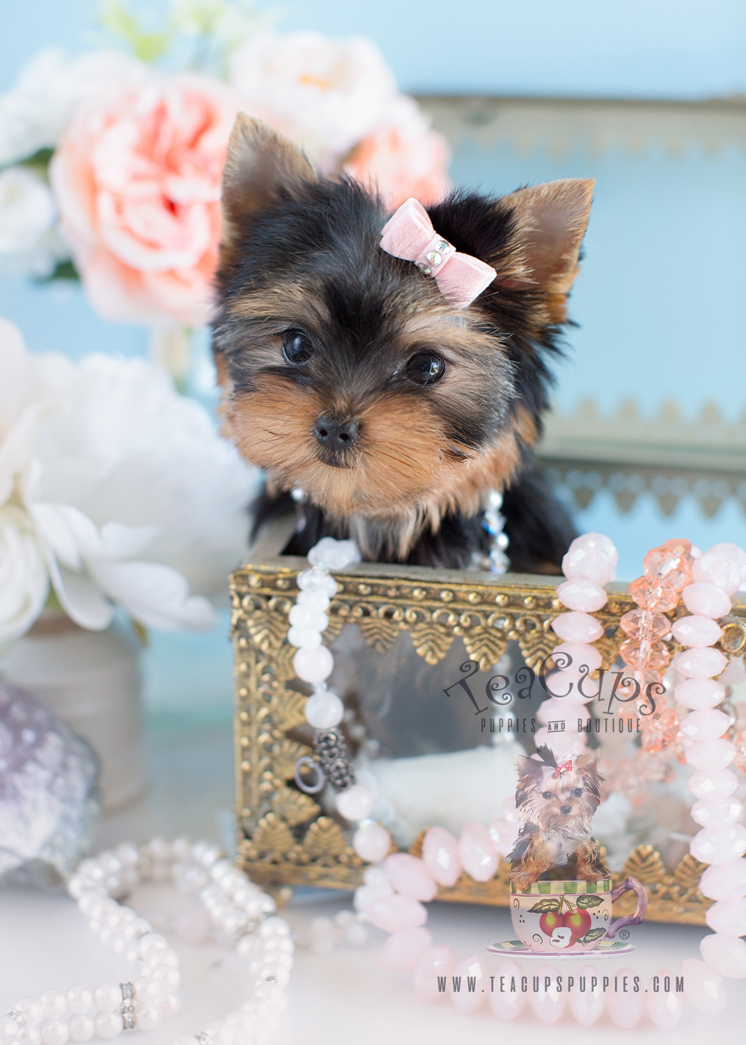 "Charming Teacup Yorkshire ""Yorkie"" Terrier Puppies for"