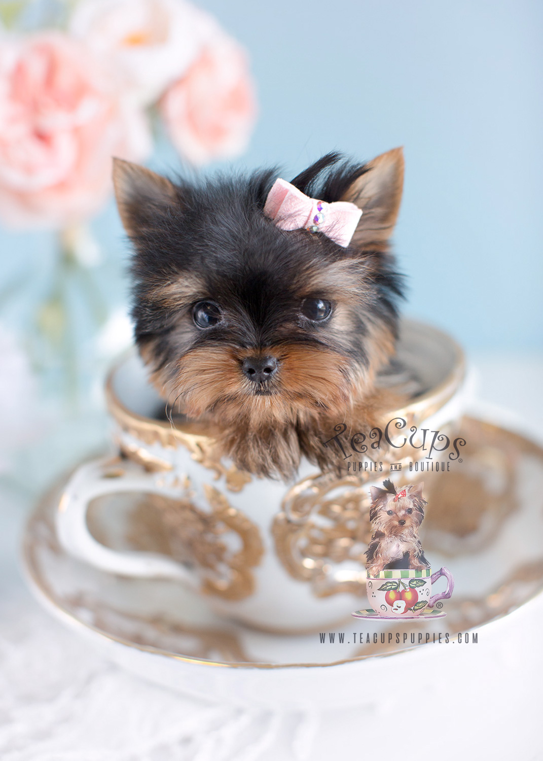 Cute Little Yorkie Puppies South Florida | Teacups, Puppies