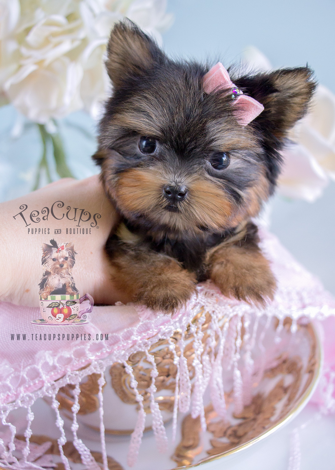 tiniest teacup yorkie puppy for sale