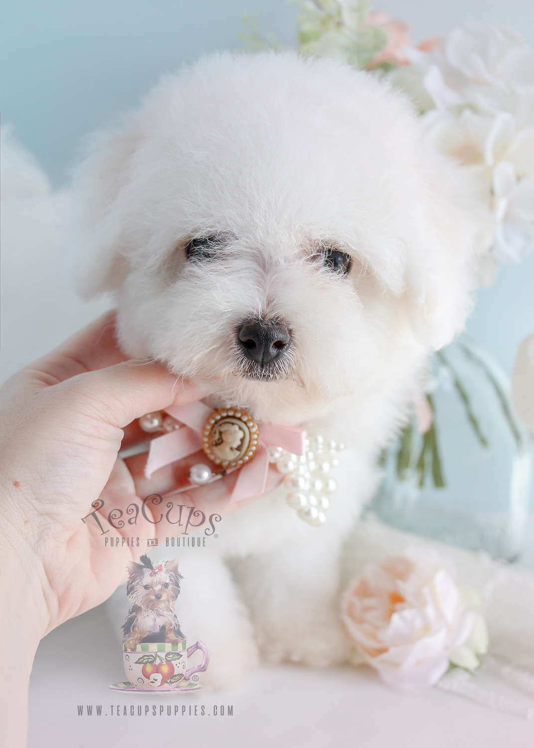 Bichon Frise Puppies Davie Teacups Puppies Amp Boutique