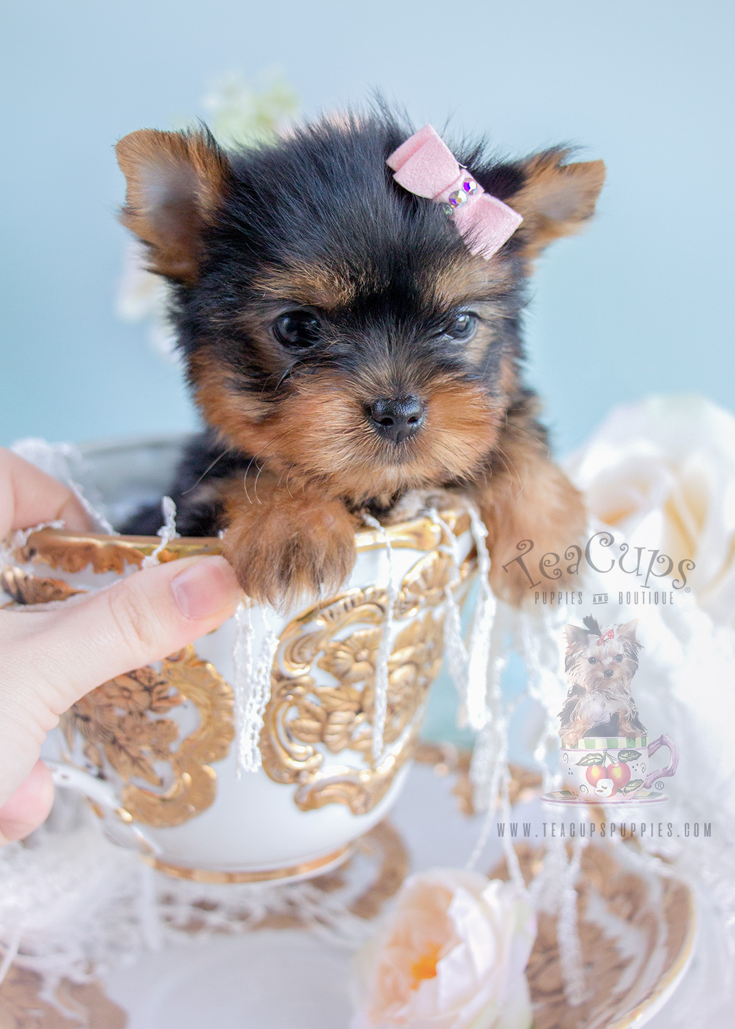 Tiny Yorkshire Terrier Puppy For Sale #276