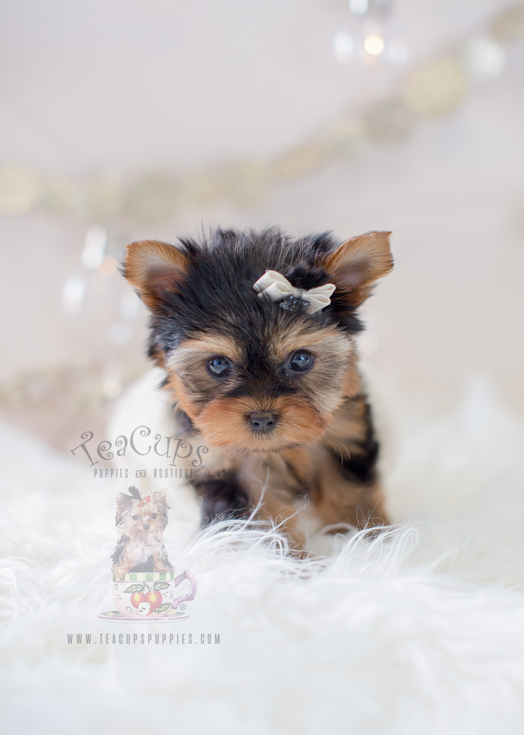 Puppy For Sale #298 Teacup Puppies Tiny Yorkie