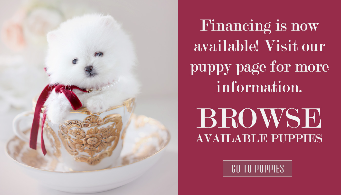 Teacup Puppy Financing
