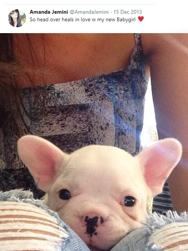 Amanda Jemini French Bulldog Puppy Teacup Puppies