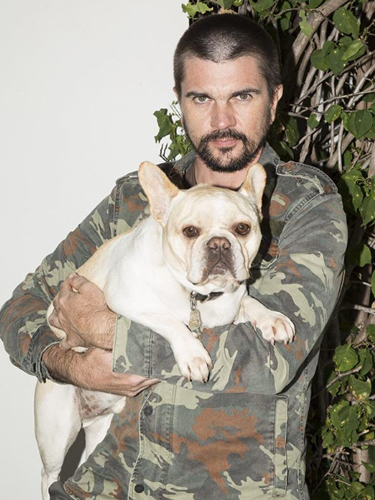 Juanes Pet Dog French Bulldog Parce
