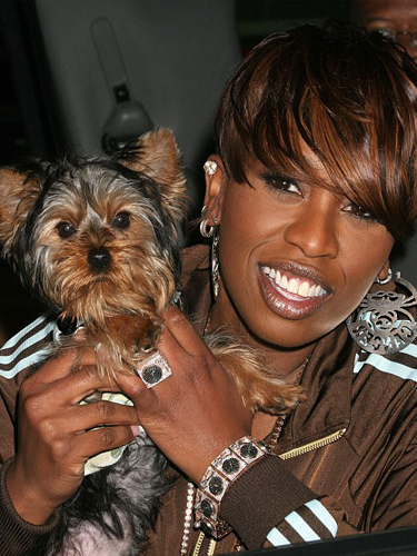 Missy Elliott Yorkie Puppy Poncho Teacup Puppies