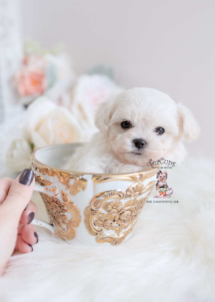 19 Tiny Teacup Animals That Will Brighten Your Day (PHOTOS)