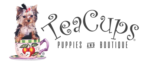 Teacup Puppies & Boutique