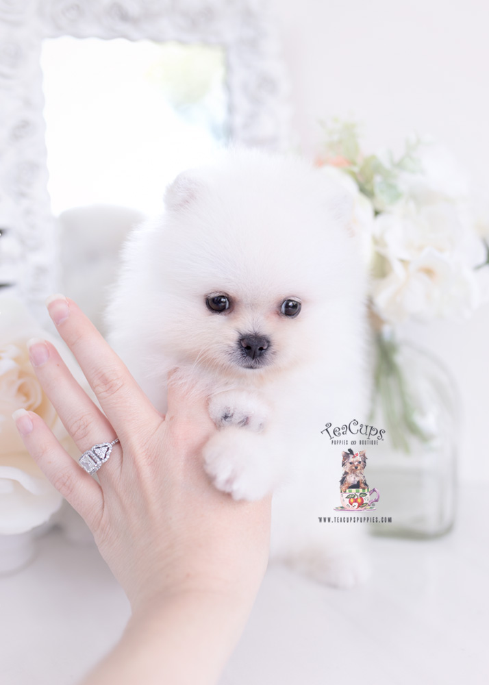 Pin Cute Puppies Kisumu